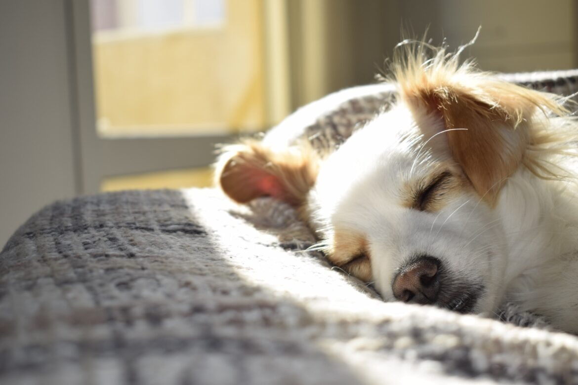 How To Create An Exclusive room For Your Dog