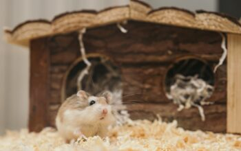 5 Small Pets For Owners Who Live In A Small Apartment