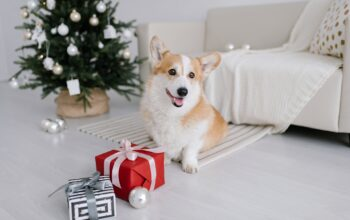 The Basics Of Budgeting For A Dog